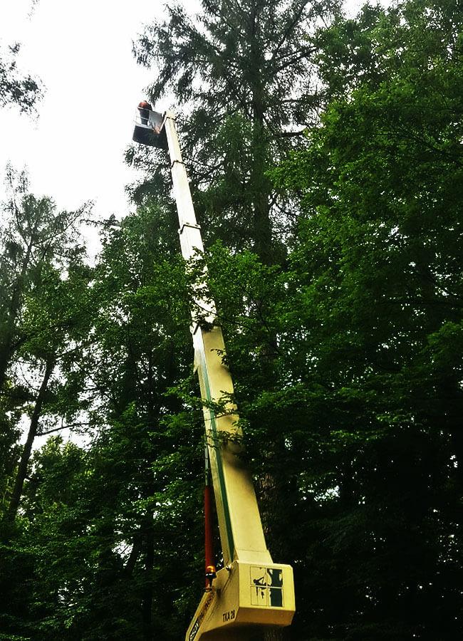 Prace nawysokości przy drzewach