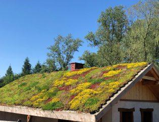 Zielony dach